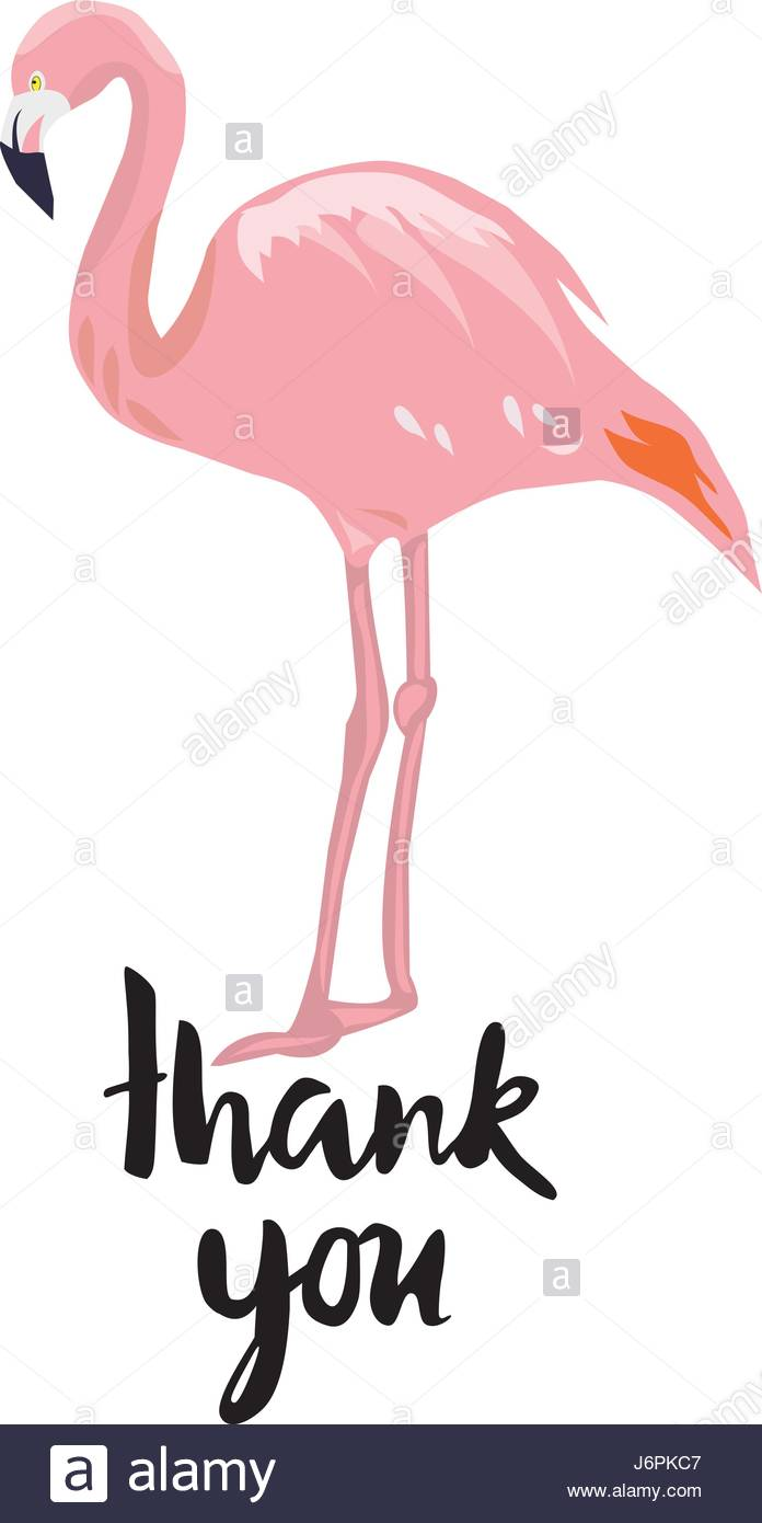 696x1390 Vector Illustration Of A Thank You Card With Flamingo Stock Vector