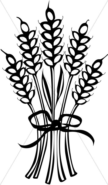 356x612 Wheat Tied with Ribbon Thanksgiving Clipart
