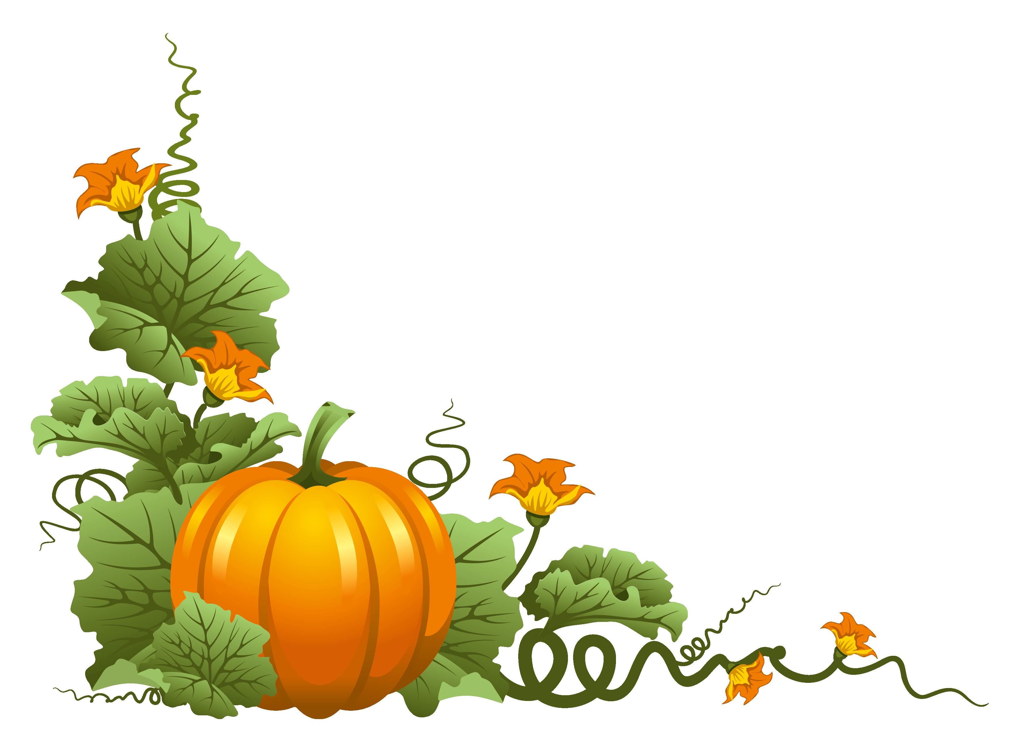 3554x2619 Thanksgiving clipart pumpkins