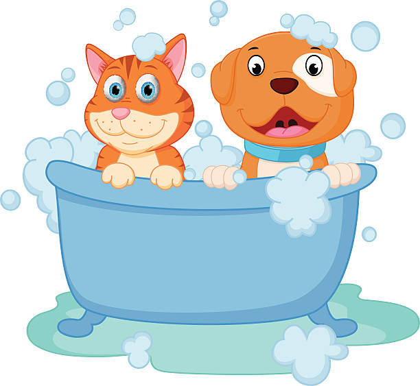 612x563 Wet Cat Clipart