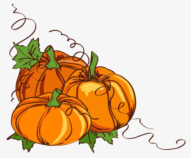 650x537 Thanksgiving Pumpkin Vine Hand Painted Illustration, Hand Painted