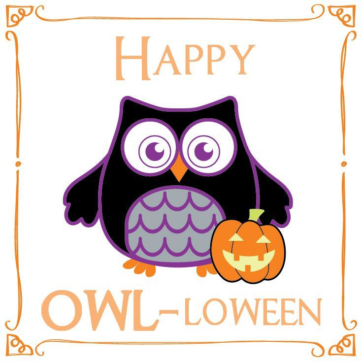 735x735 614 Best Owl Oween Images Love, Owls And So Cute