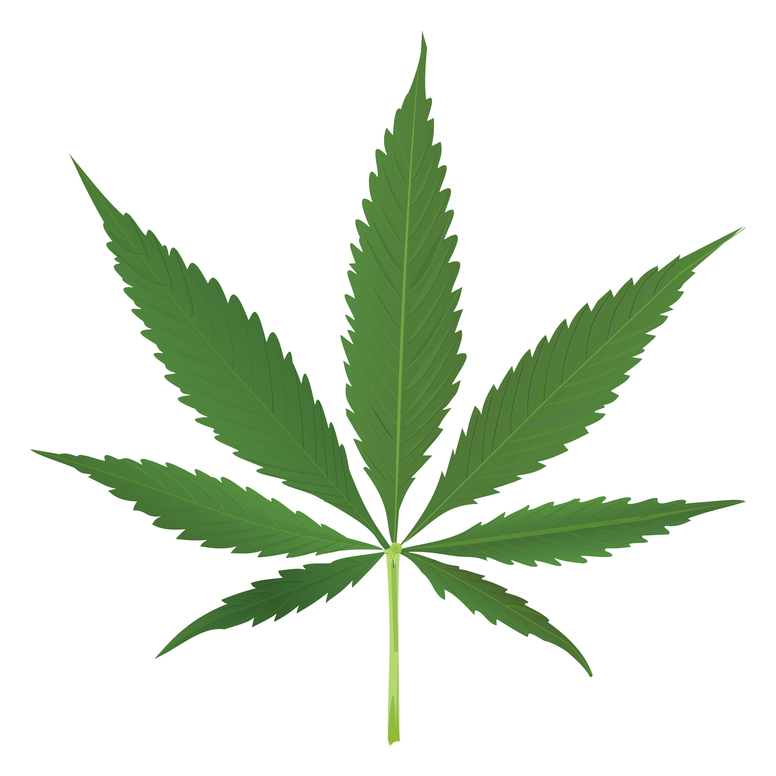 2600x2600 Thug Life Weed Leaf Transparent Png