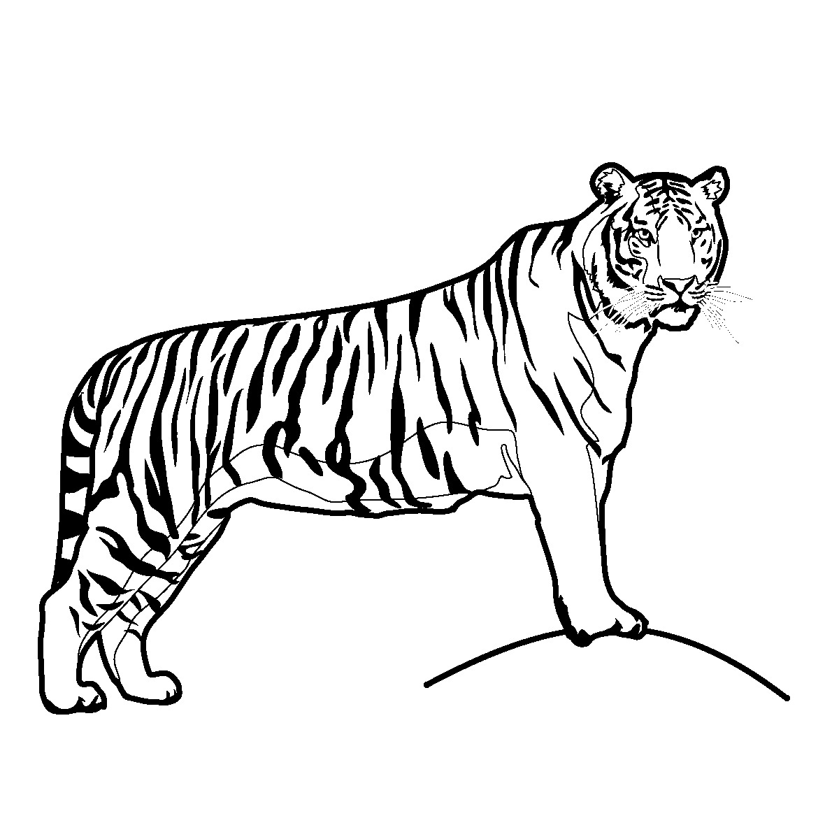 1200x1200 Free Tiger Clipart Black and White Image