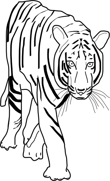 360x592 B W Tiger Clip Art Free Vector In Open Office Drawing Svg ( Svg