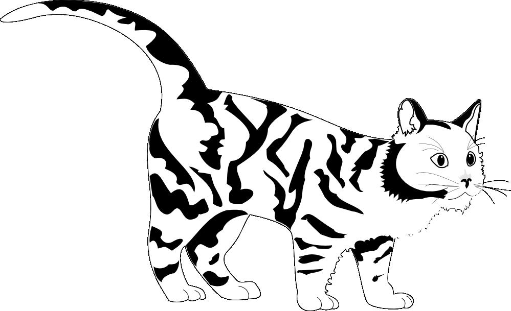 999x609 White Tiger Clip Art