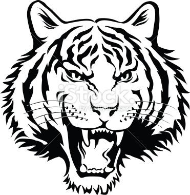 371x380 White Tiger clipart head