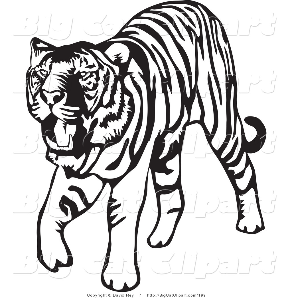 1024x1044 Big Cat Vector Clipart of a Walking Black and White Tiger on White