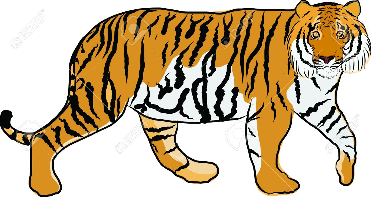 1300x690 Tiger Clipart Jungle Animal