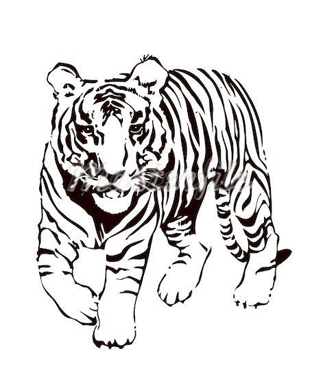 471x550 Top 95 Tiger Clip Art