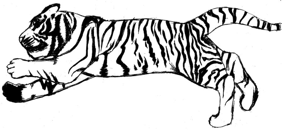 900x415 Running Tiger Clipart Black And White Letters Example