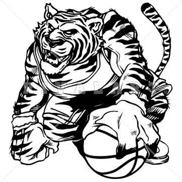 361x361 Tiger Basketball Clipart Black And White