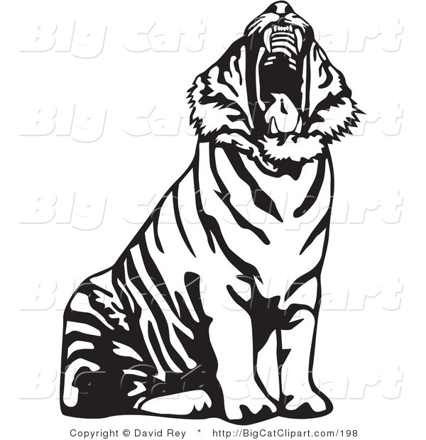 600x620 Big Cat Vector Clipart Of A Yawning Black And White Tiger Roaring
