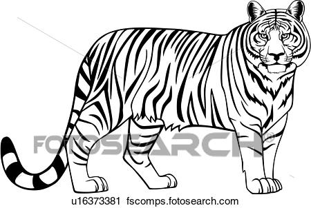 450x302 Clipart Of , Animal, Tiger, Wild, U16373381