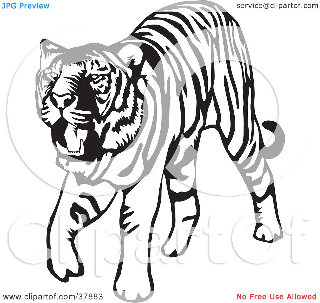 1080x1024 Clip Art Tiger Clip Art Black And White