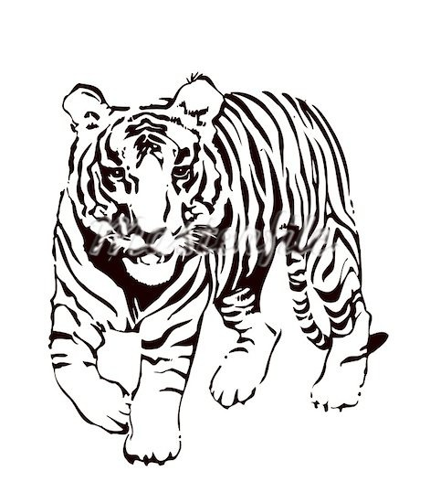 471x550 Running Tiger Clipart Black And White Letters Format