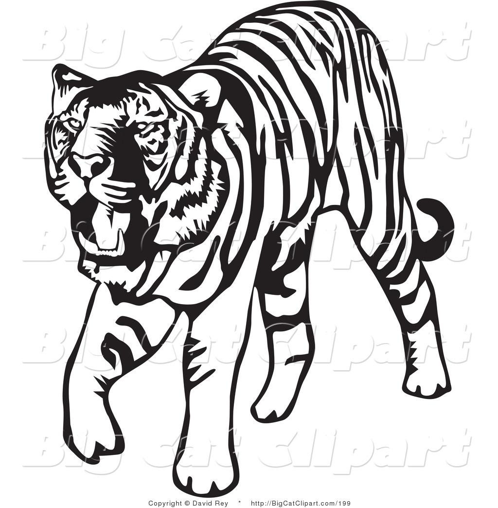 1024x1044 Black Amp White Clipart Tiger