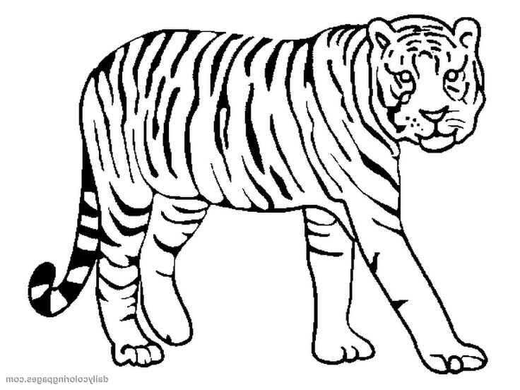736x552 1734 best Coloring Pages images Coloring pages
