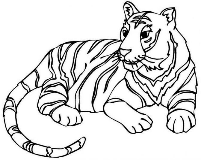 671x533 Coloring Pages Tiger Coloring Picture Tigers Pages10 Pages Tiger
