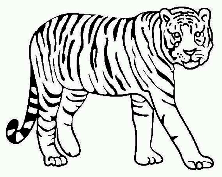 754x600 Tiger Color Page Intricate Cat Coloring Pages For Adults Tiger