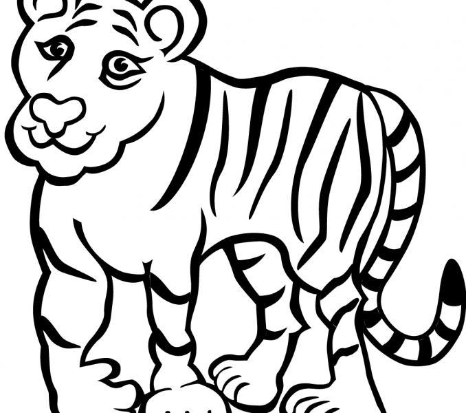 678x600 Tiger Coloring Pages Best Coloring Pages