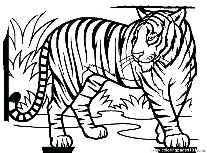 800x591 Tiger Coloring Pages Hard Owl Coloring Pages Tiger Liked Wild Cat