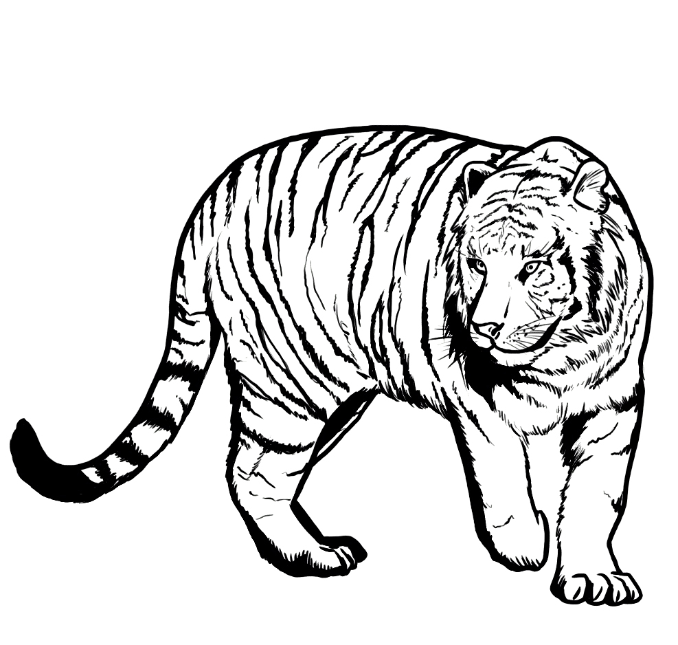987x938 Unique Tiger Coloring Pages Top Coloring Books
