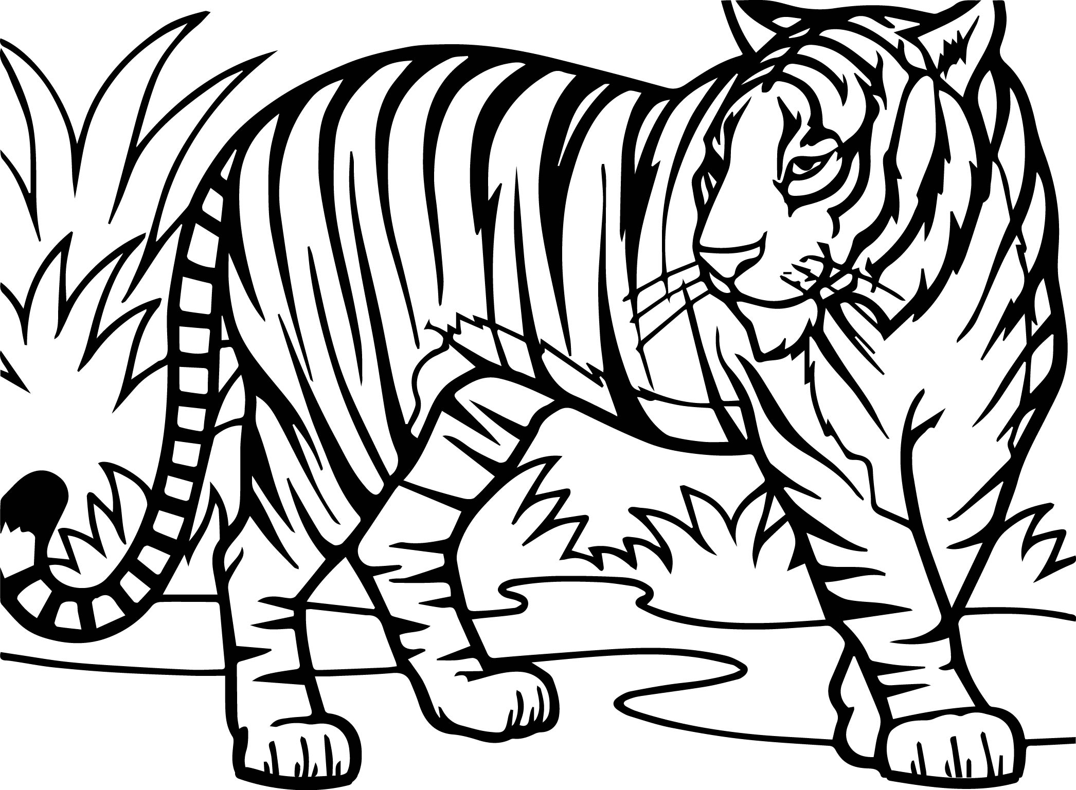 2092x1537 Beautiful Tiger Coloring Pages 66 About Remodel Free Coloring Book