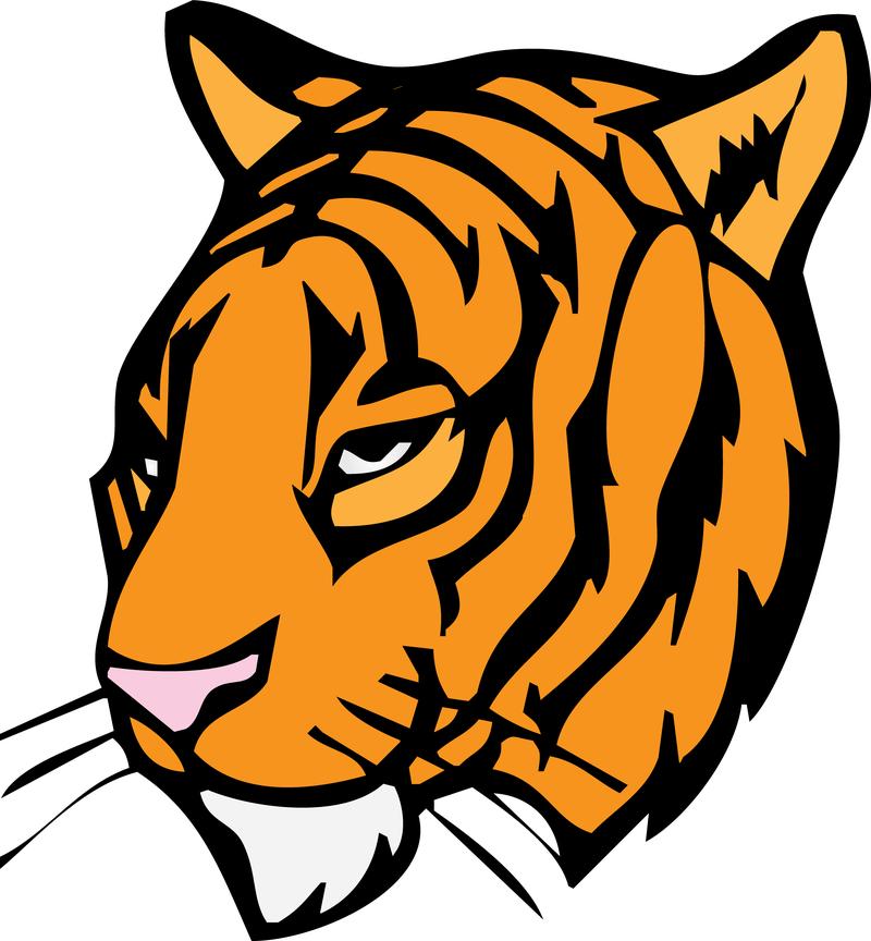 800x864 Orange Tiger Head Clipart