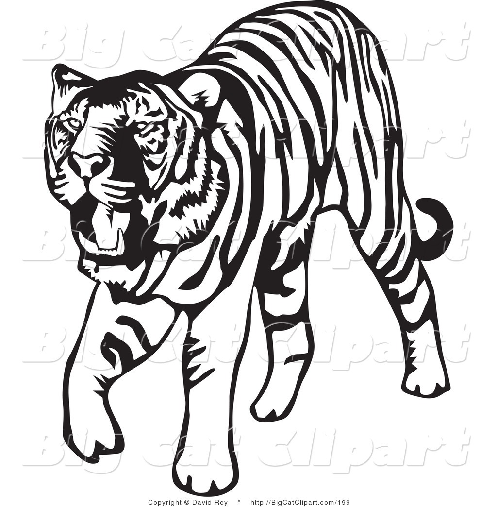 1024x1044 Baby Tiger Face Clipart Black And White Letters Format