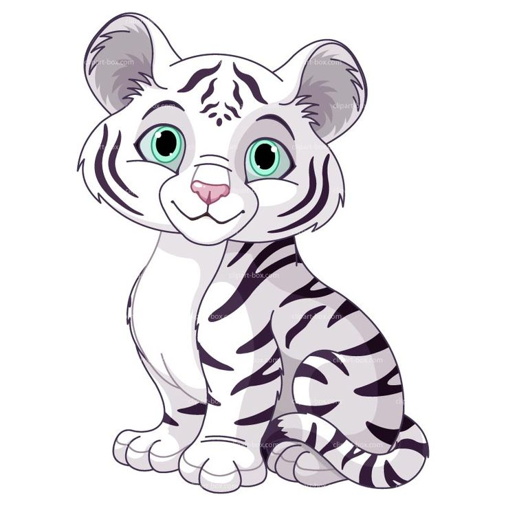 736x736 Clipart White Tiger Free Vector Design