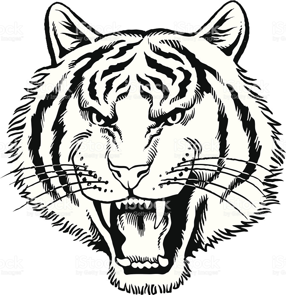 991x1024 Tiger clipart tiger roar