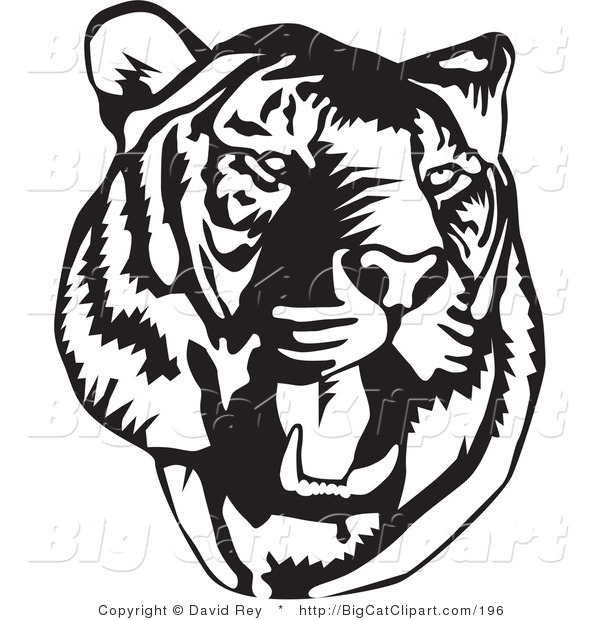 600x620 Big Cat Vector Clipart of a Black and White Roaring Tiger Head on