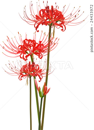 325x450 Lily clipart flower cluster