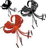 163x170 Tiger Lily Clip Art