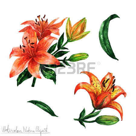 450x450 Tiger lily clipart