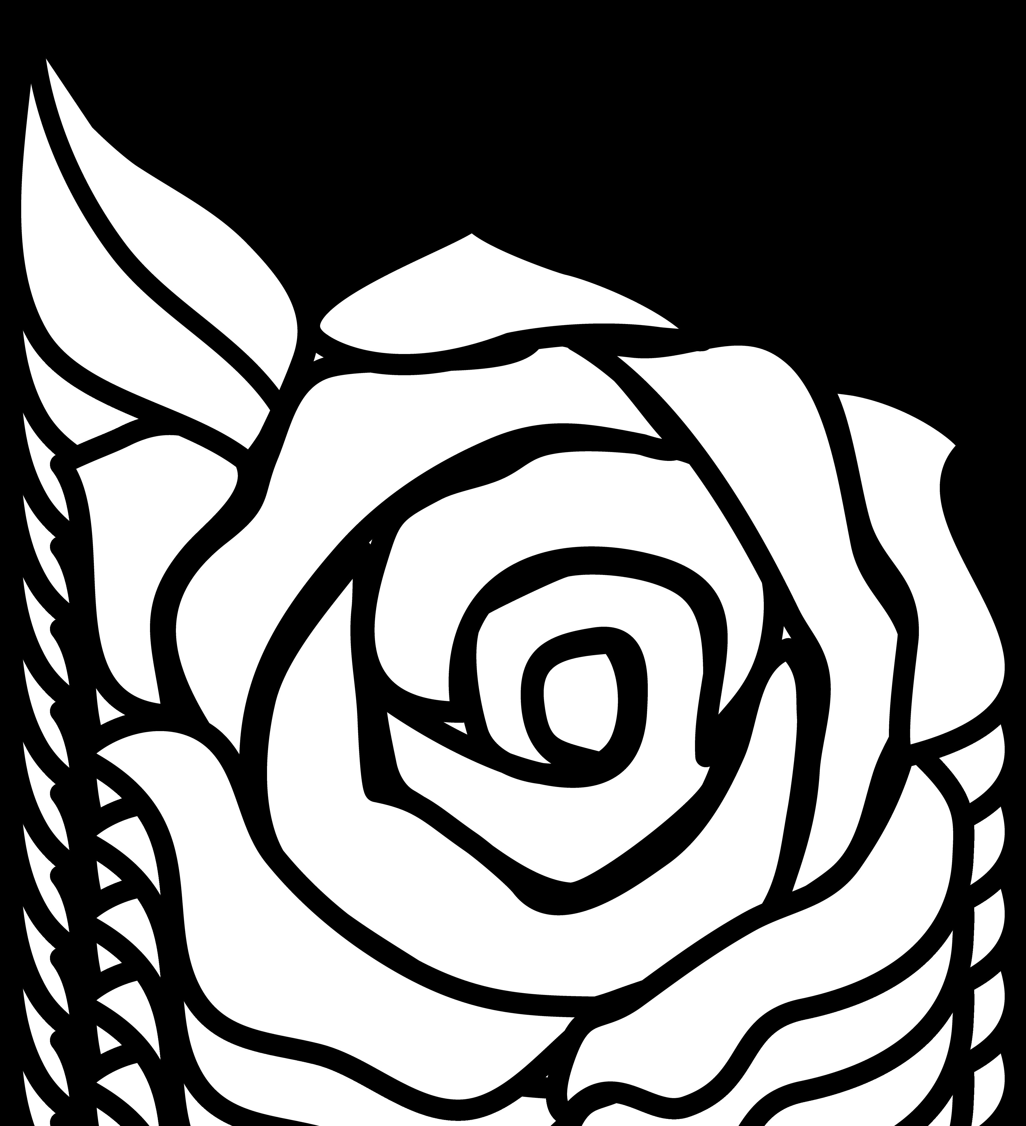 4042x4434 White Rose Border Clipart