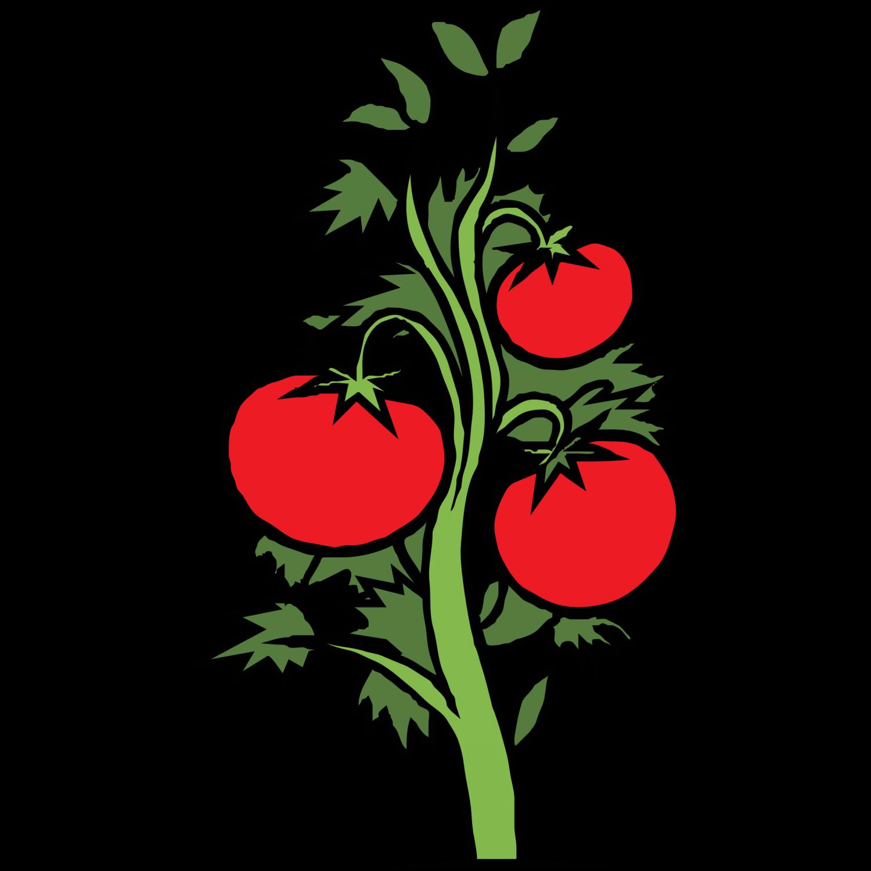1500x1500 Tomato Plant Clip Art Clipartfest Clipartingcom, Tomato Plant