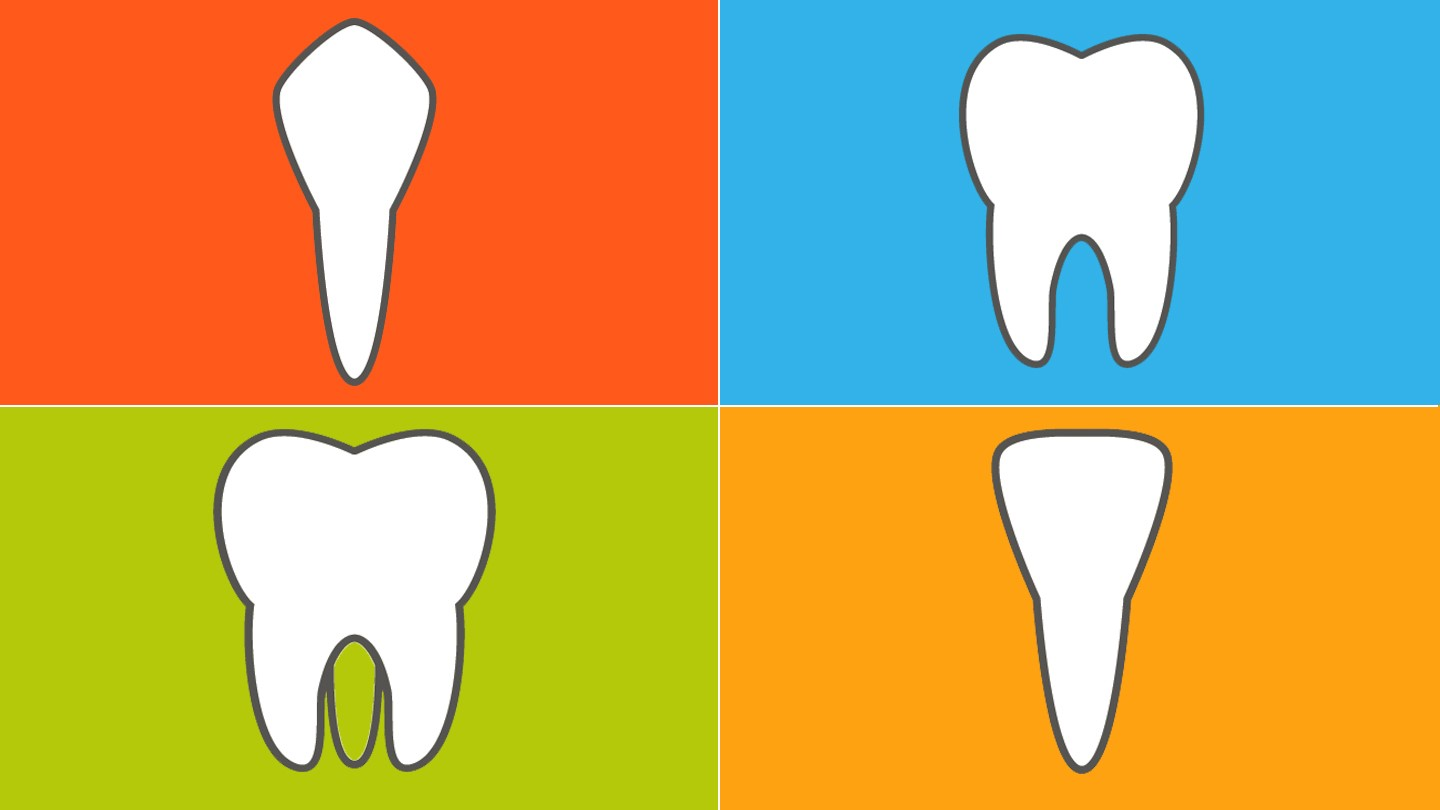 1440x810 The 4 Types Of Teeth And How They Function Everyday Health