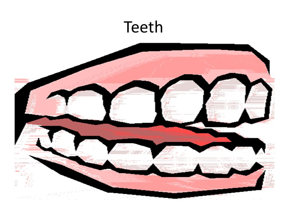 960x720 Teeth. Tooth Decay Cleaning Your Teeth Bacteria Feed On Food Left