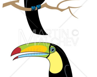 340x270 Toco Toucan Etsy