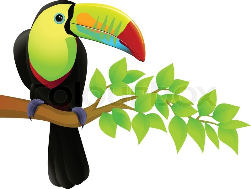 800x603 Toucan Bird In The Jungle Stock Vector Colourbox