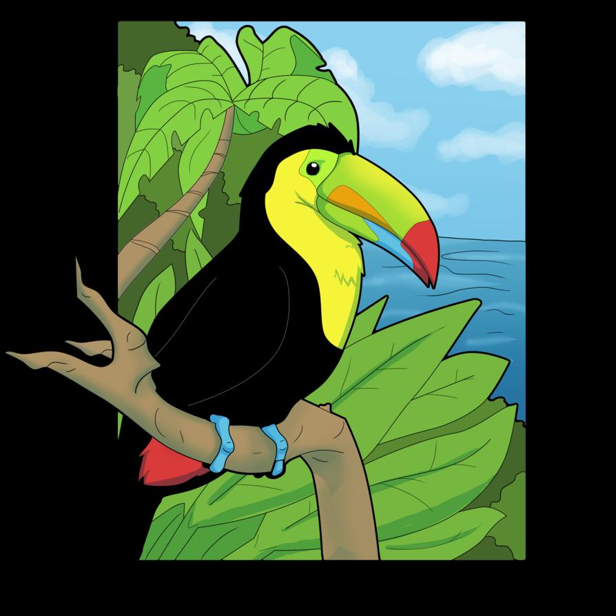 894x894 Toucan Clipart Keel Billed