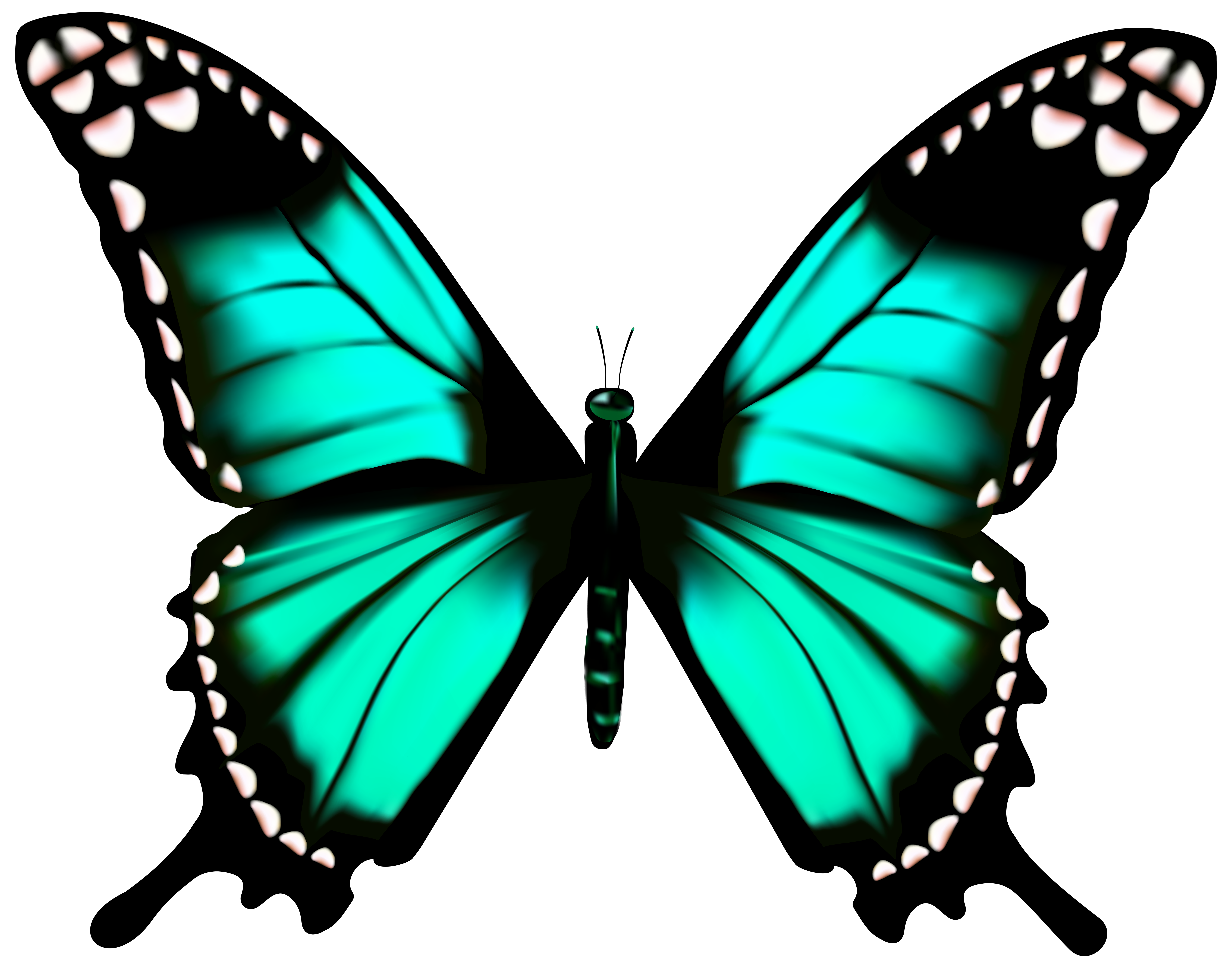 Transparent Butterfly Clipart | Free download on ClipArtMag
