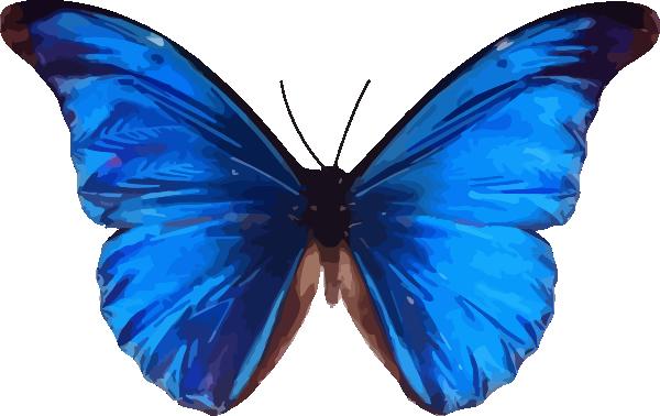 600x378 Blue Butterfly Clip Art