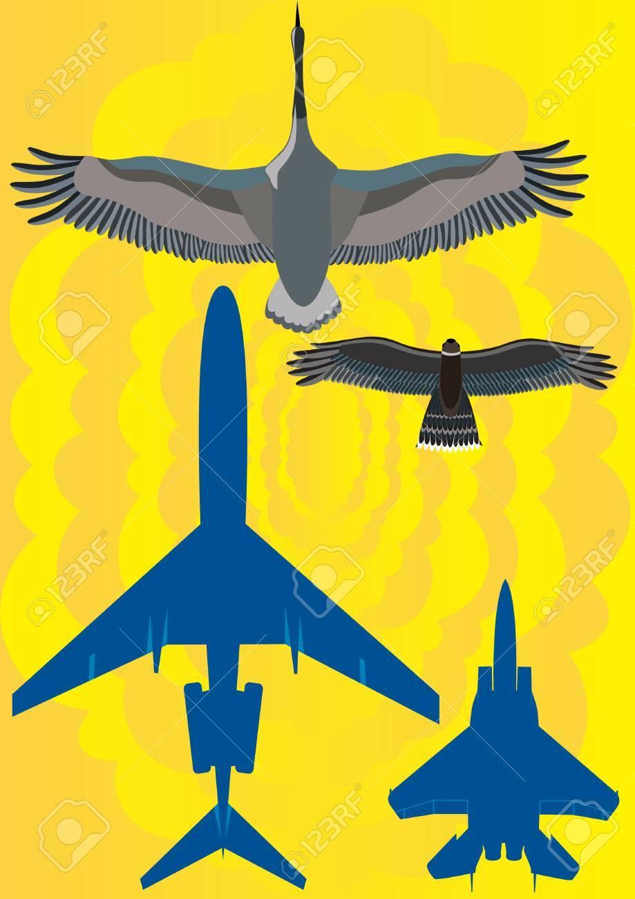 919x1300 Military Plane Near The Passenger Airliner. Two Birds Flying