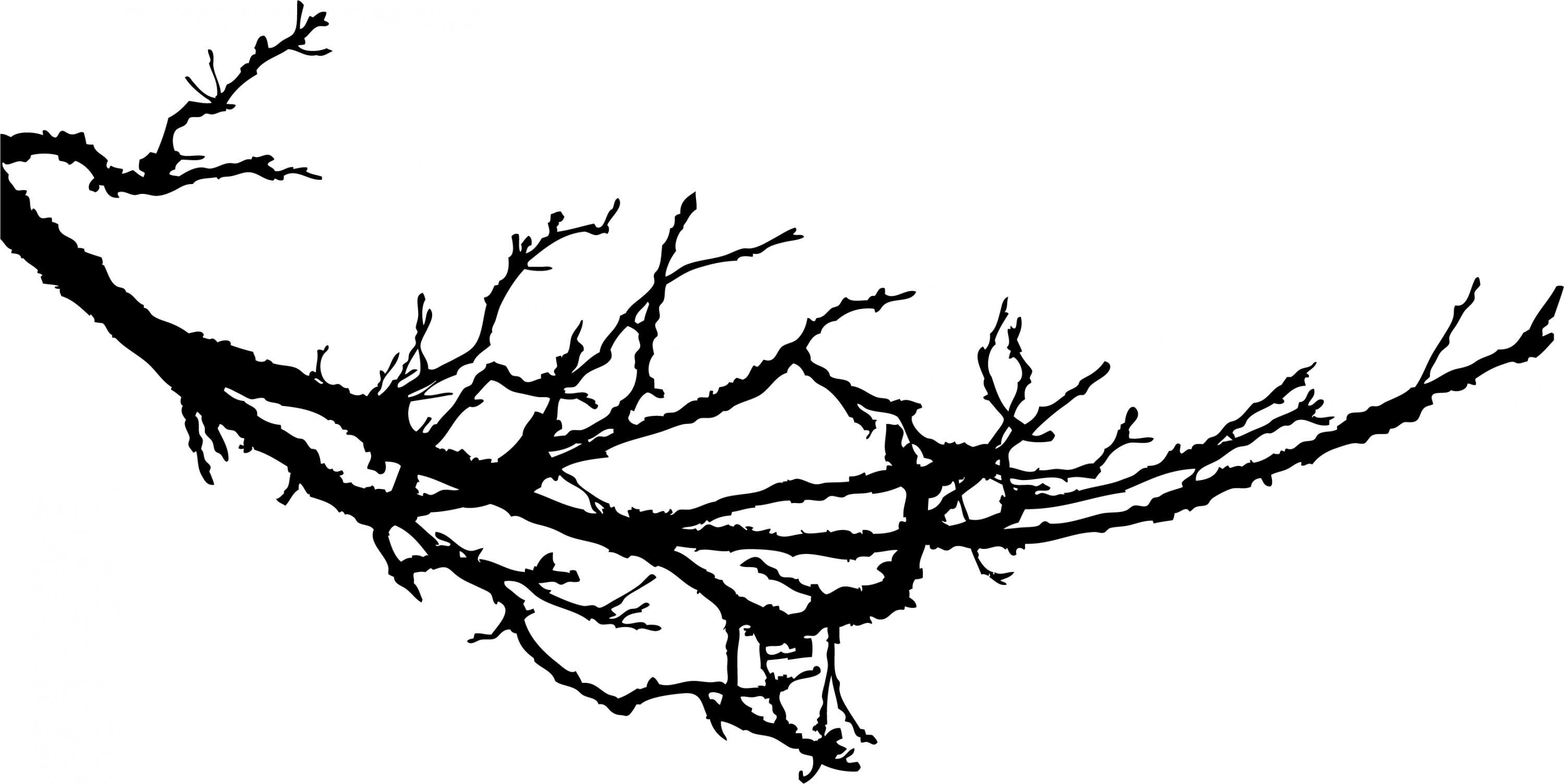 3000x1504 Branch clipart black and white