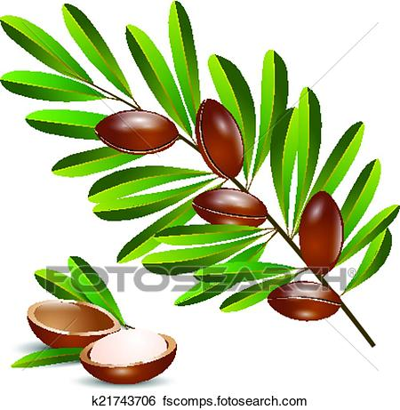 450x461 Clip Art of vector illustration argan tree branch k21743706