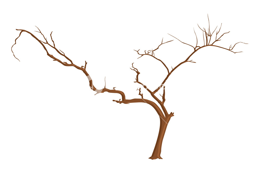 1000x669 Design Art Of Dead Tree Branches Royalty Free Stock Image
