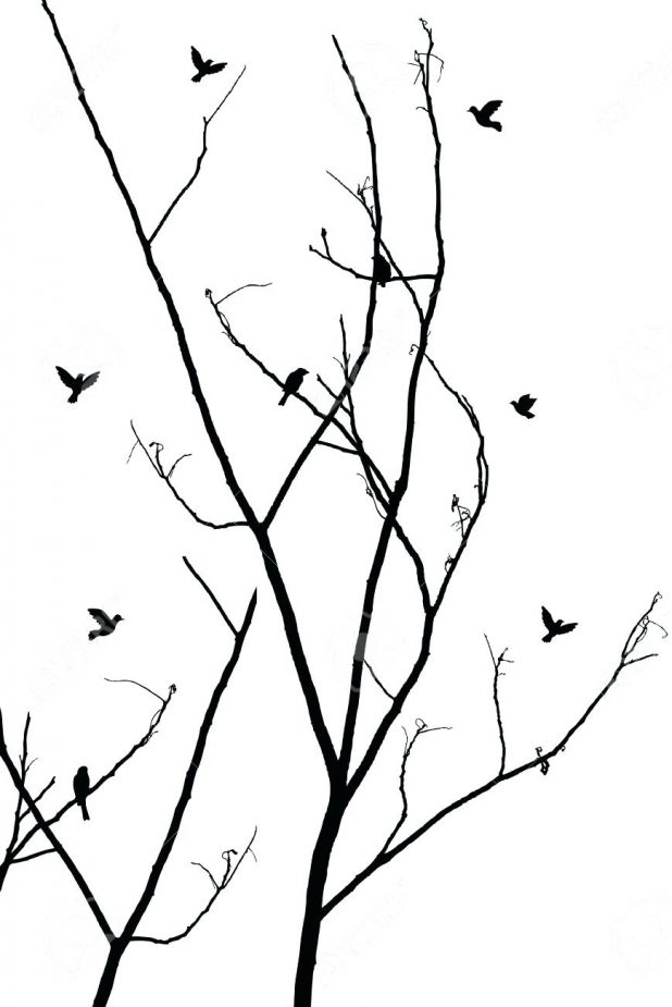 618x925 Outline Tree Branches Of With Roots Three Outline Of Tree With